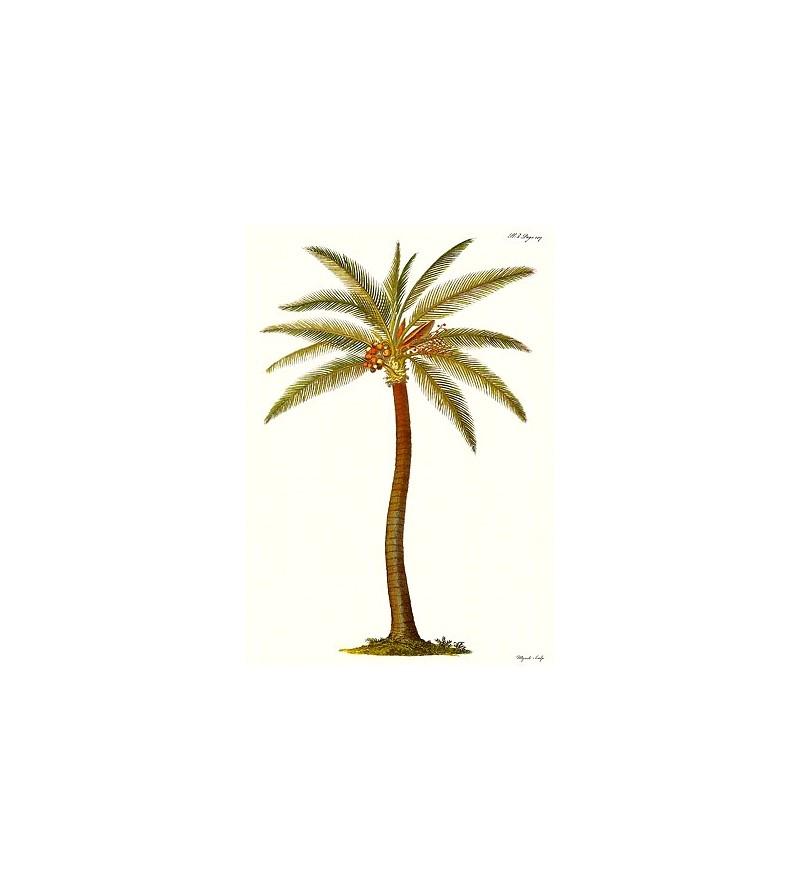 Poster Art Palm Tree 45x30 cm
