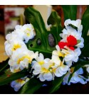 Colliers Fleurs Poe Poe Luxe
