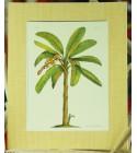 Cadre Déco Banana Tree Fibre Naturelle 20X25 cm