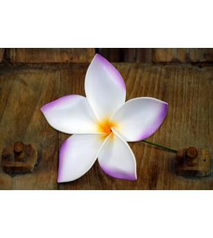 Fleur D'oreille Frangipanier Violette Blanche