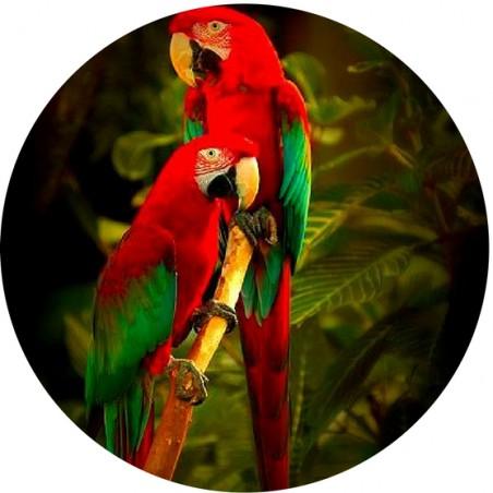 Magnet Décapsuleur Jungle Bird