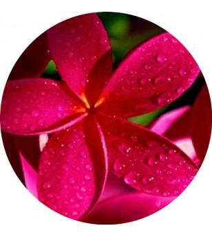 Magnet Décapsuleur Pink Frangipanie