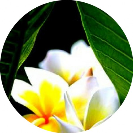 Magnet Décapsuleur Yellow Frangipani